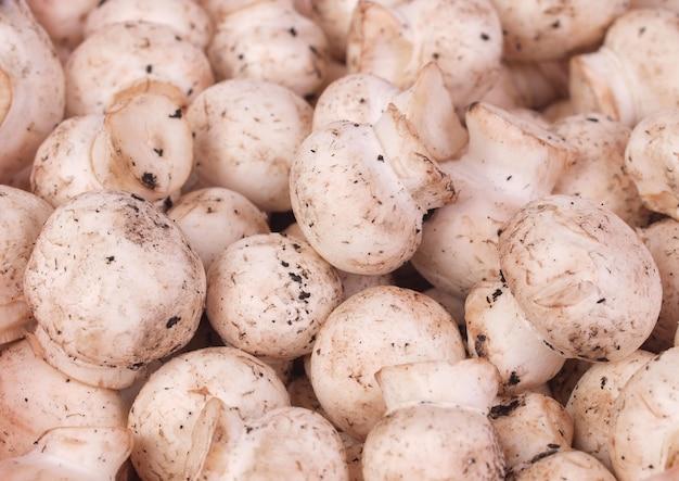 Champignon de cogumelos