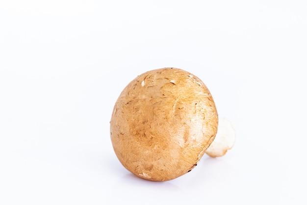 Champignon fresco cogumelos em branco