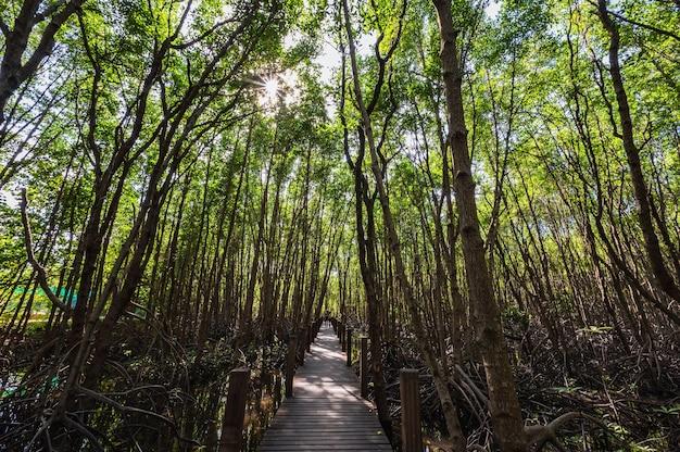 Chanthaburi, tailândia-28 de novembro de 2020: passarela da ponte de madeira na floresta de manguezais da baía de kung krabaen na cidade de chanthaburi na tailândia.