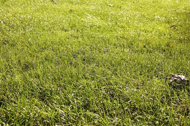 Chão coberto de grama