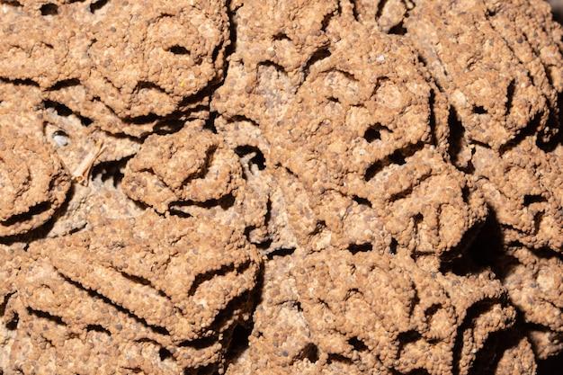 Chão da raiz, ninho das térmitas