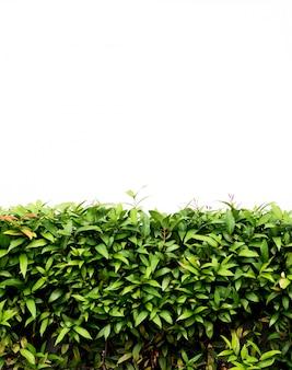 Chão de concreto com folhas verdes
