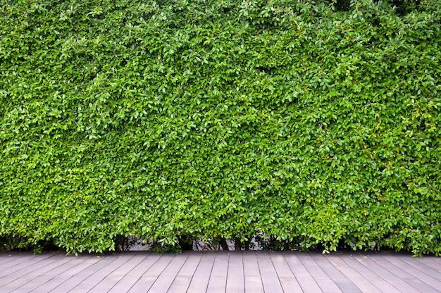 Chão de madeira com parede de arbusto.