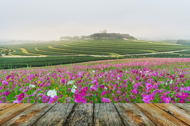 Chão de madeira cosmos flor de pastagem