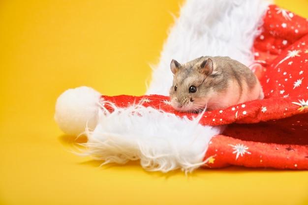 Chapéu decorativo de hamster e natal em fundo amarelo