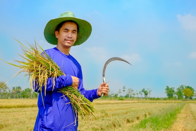 Chapéu do desgaste de homem do fazendeiro do sorriso usando a foice à almofada de arroz da colheita no campo tailândia do arroz.