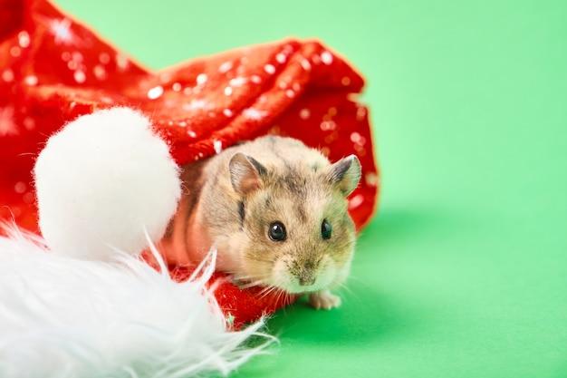 Chapéu vermelho de hamster e natal sobre fundo verde