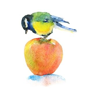 Chapim aquarela sobre a maçã. pássaro desenhado de mão em branco