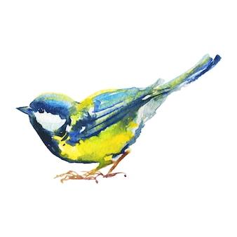 Chapim desenhado de mão. pássaro em aquarela em branco