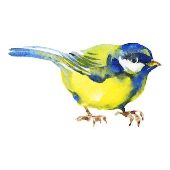 Chapim em aquarela. pássaro desenhado de mão em branco