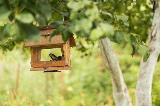 Chapim pequeno sentado no alimentador de madeira para pássaros