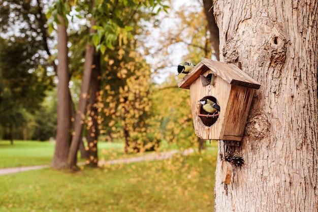 Chapim-real em uma casa de passarinho na árvore no parque de outono, copie o espaço.
