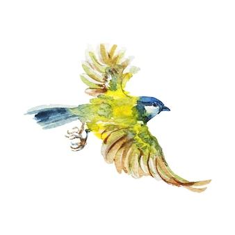 Chapim-voador em aquarela. pássaro desenhado de mão em branco