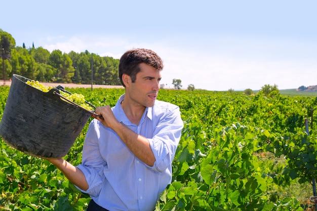 Chardonnay colheita com enólogo agricultor fazendeiro