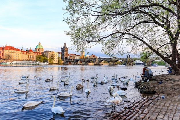 Charles bridge e arquitetura da cidade velha em praga, república checa.