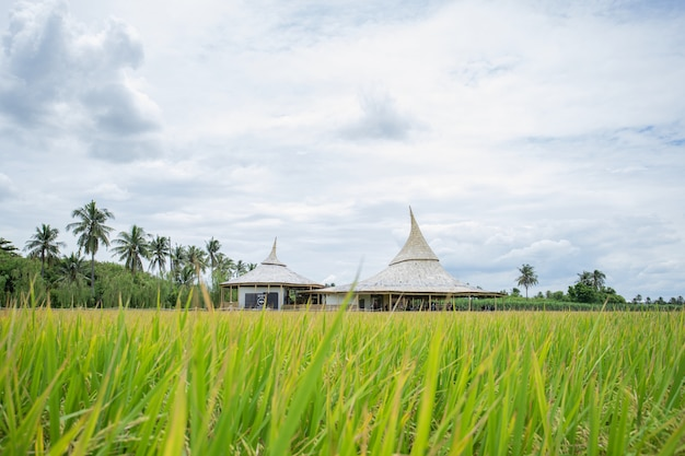 Chata thammachart café café em um campo de arroz