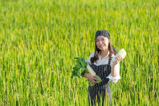 Chef colhendo produtos frescos da fazenda orgânica
