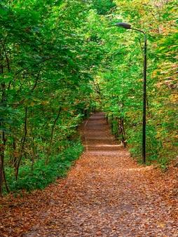Cheio de folhas de outono caminho no parque. moscou.
