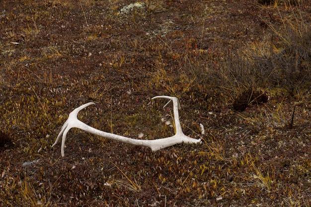 Chifres de veado no chão nos portões do parque nacional do ártico.