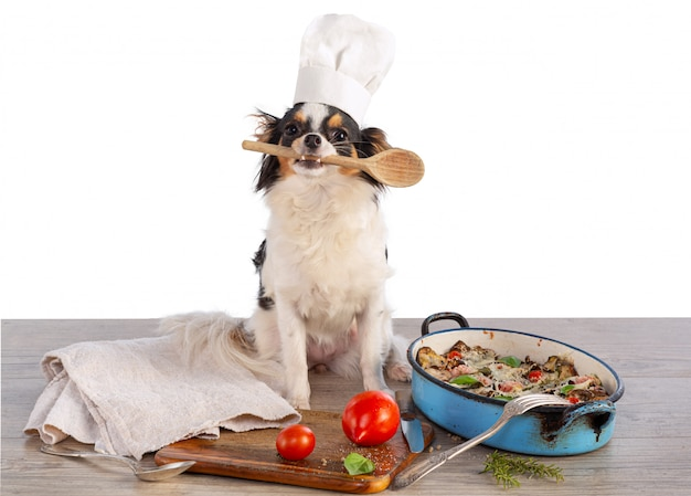Chihuahua com chapéu de cozinheiro e um gratinado de legumes