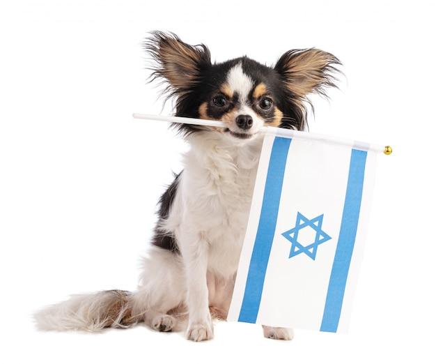 Chihuahua com uma bandeira de israel
