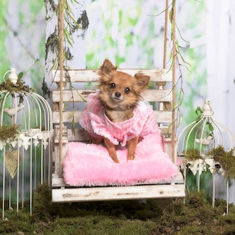 Chihuahua com uma jaqueta rosa sobre um travesseiro rosa, em decoração pastoral Foto Premium