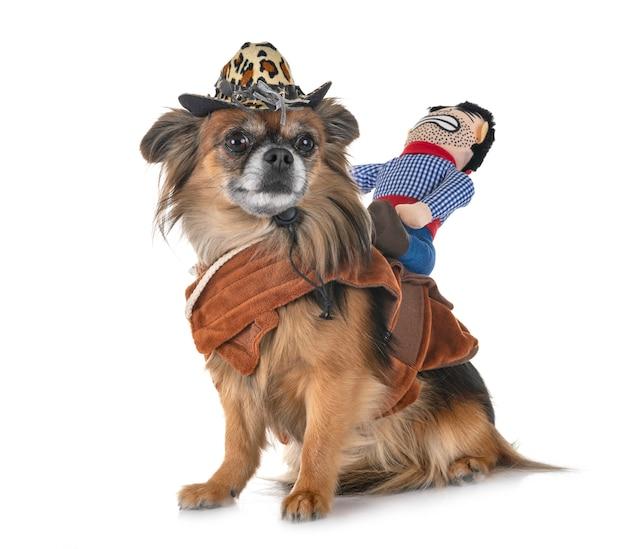 Chihuahua e vaqueiro
