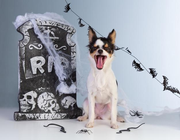 Chihuahua que cai no halloween com decoração de lápide