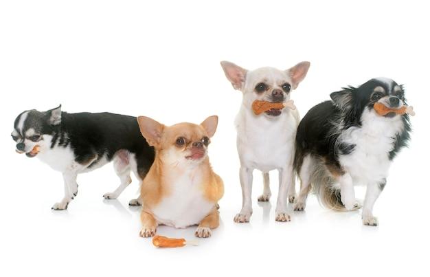 Chihuahuas e guloseimas