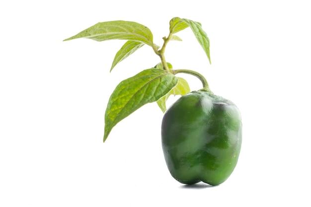 Chile manzano com um rama de seu arbol