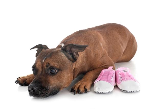 Chinelos para cães e bebês