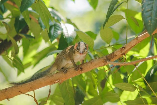 Chipmunk está em uma árvore com pequenos mamíferos.