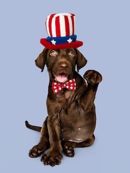 Chocolate bonito labrador retriever no chapéu de tio sam e gravata borboleta
