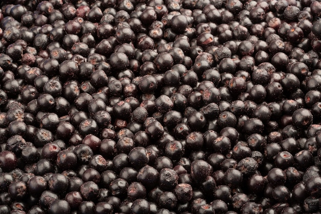 Chokeberry fresco congelado. fundo de alimentos de frutas.