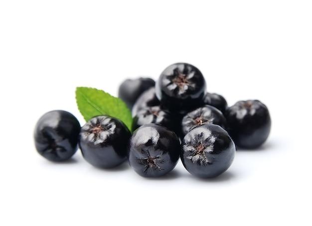 Chokeberry preto isolado no branco