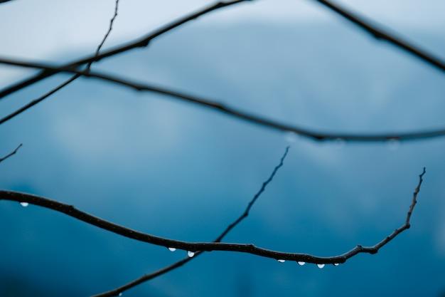 Chuva cai galho de árvore seca