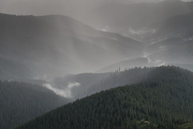 Chuva forte de verão acima da floresta de árvores de peles na área de montanha