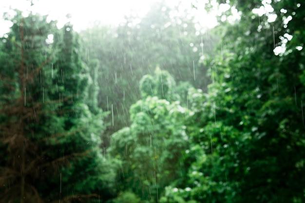 Chuva forte no fundo de árvores verdes. paisagem na floresta úmida. fundo bonito. fora de foco