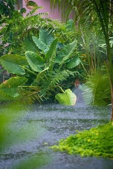 Chuva nos trópicos. belos bosques e um rio.