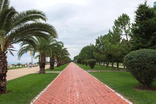 Ciclovia entre palmeiras verdes no parque à beira-mar de batumi. cenário natural