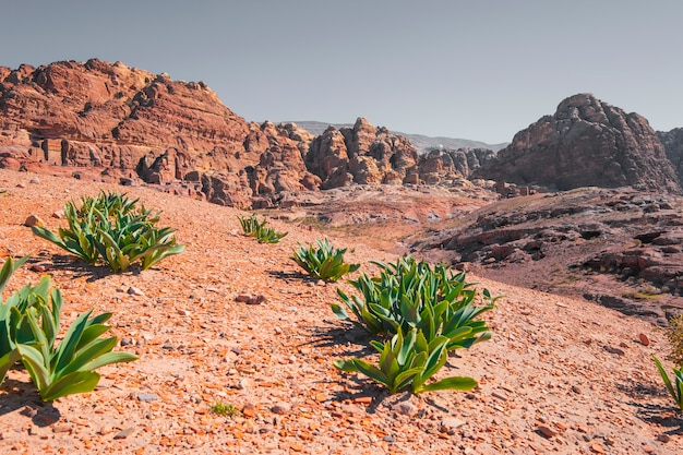 Cidade de petra, na jordânia. vegetação no deserto no fundo de túmulos na rua das fachadas