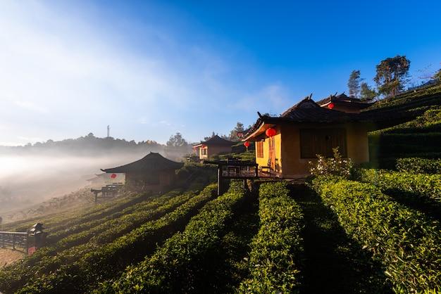 Cidade natal em campos de chá com nevoeiro no moring. proibição rak thai village, mae hong son, tailândia.