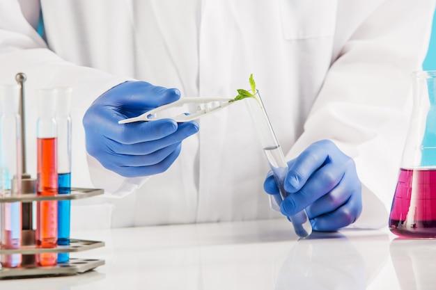 Ciências das plantas em laboratório