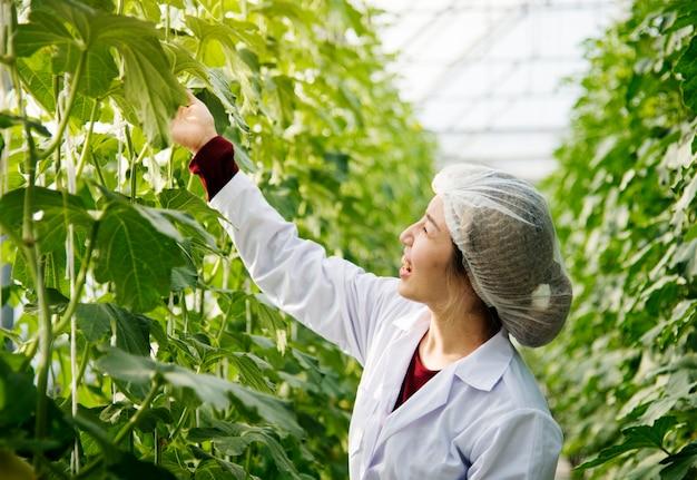 Cientista asiática estudando licença de planta