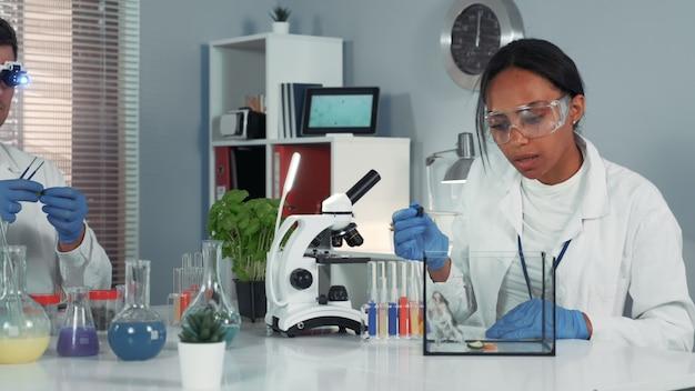 Cientista de pesquisa feminina em óculos de segurança, fornecendo experimento com o mouse e depois mostrando seu espanto