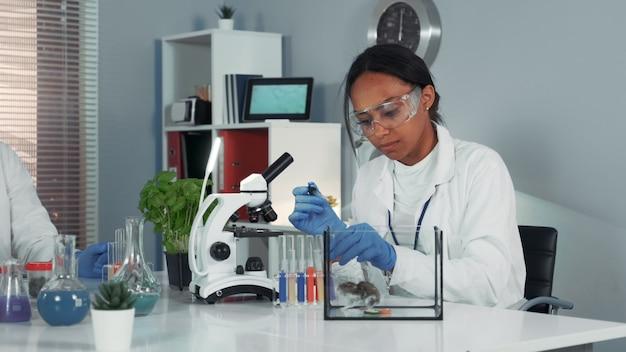 Cientista em óculos de segurança, fornecendo experimento com mouse