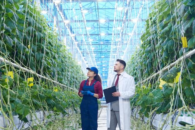 Cientista examinando legumes na plantação