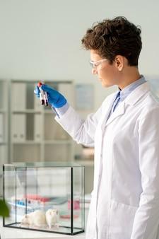 Cientista farmacêutico vestindo jaleco estudando infecção por coronavírus preparando sangue infectado para experimentos em ratos