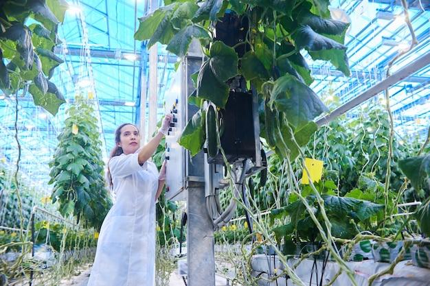 Cientista fêmea examinando legumes