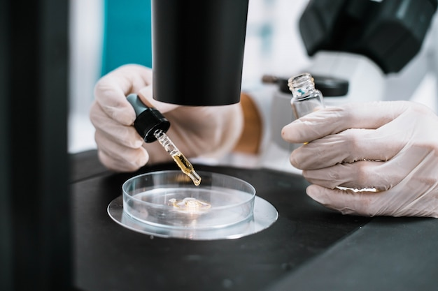 Cientista gota de líquido amarelo no prato no microscópio
